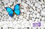 مسیر رشد NFها: خودتان را مهم بدانید